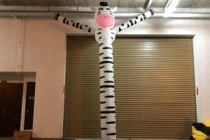 zebra dancing tube rental singapore
