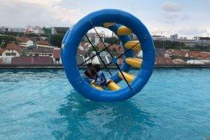 hamster wheel for kids singapore
